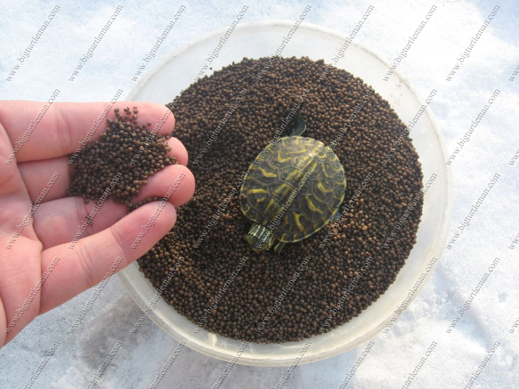 Types Of Pet Turtles Types of food and prices.